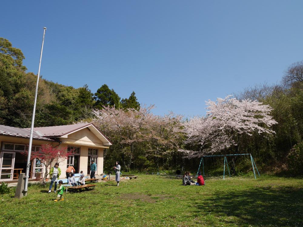 150411_hanami02