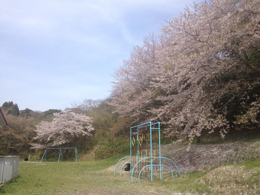 150411_hanami03